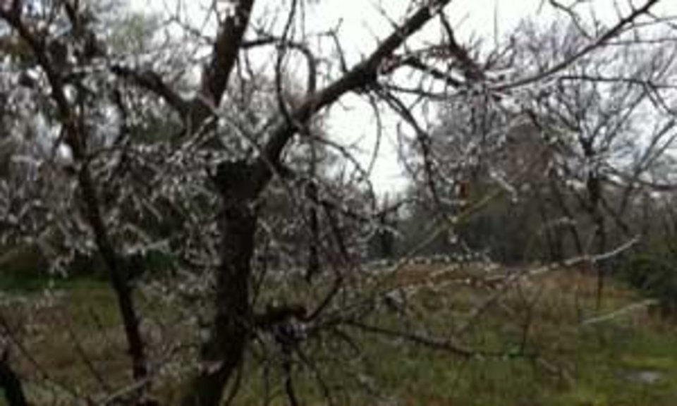 Ice forming on trees in Edmond Wednesday morning. Photo by Stephanie Sallaska