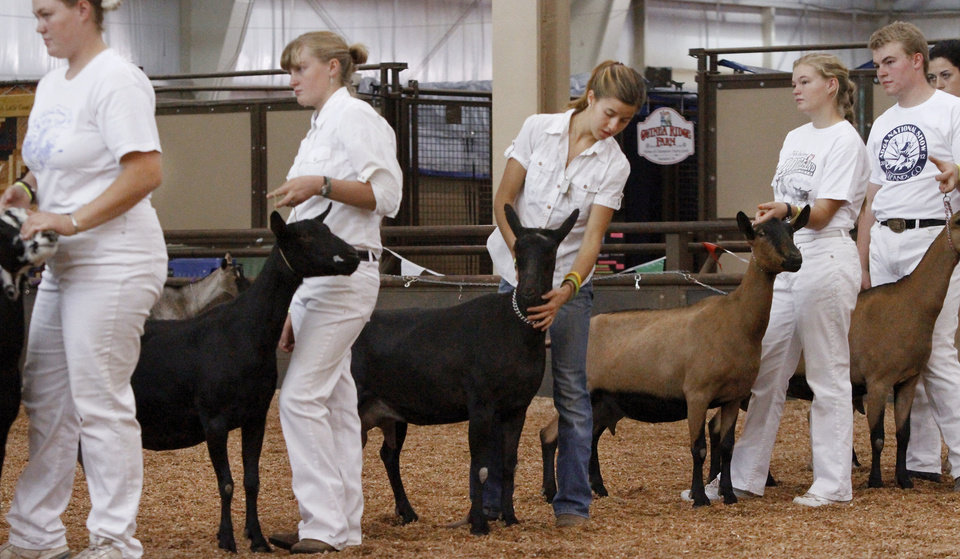 Youth show their animals during goat judging  at the Oklahoma State Fair on Wednesday, Sep. 19, 2012.  Photo by Jim Beckel, The Oklahoman.
