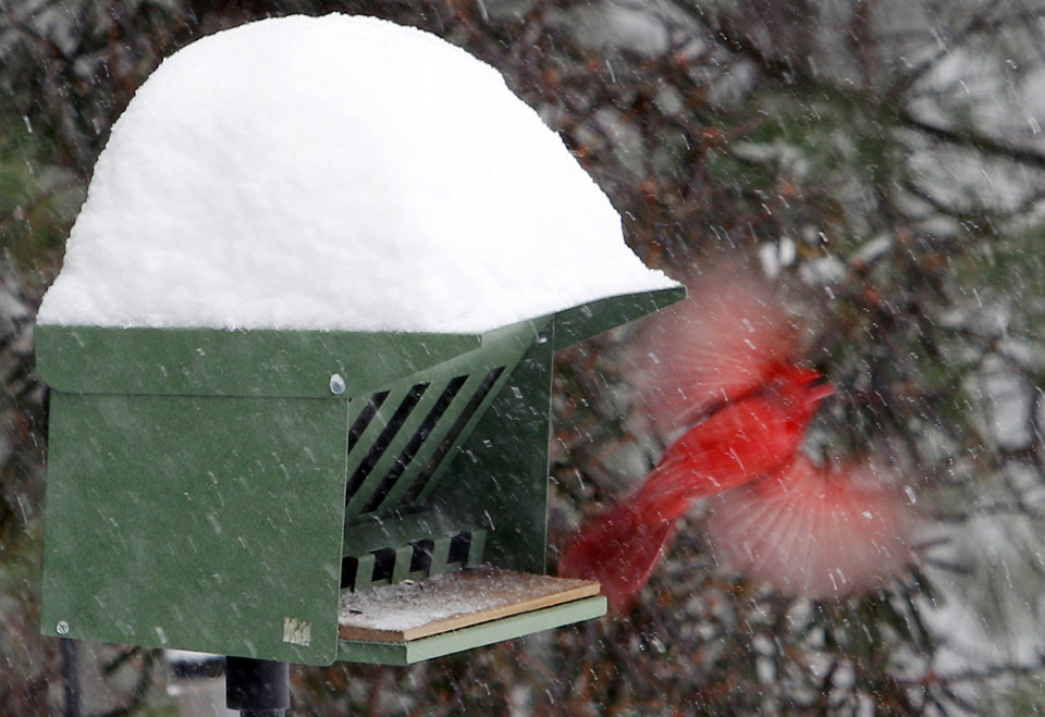 Photo - A cardinal takes flight from a snow-covered bird feeder Wednesday, Feb. 5, 2014, in Marlborough, Mass. Up to a foot of snow was predicted through the day in some parts of Massachusetts. (AP Photo/Bill Sikes)