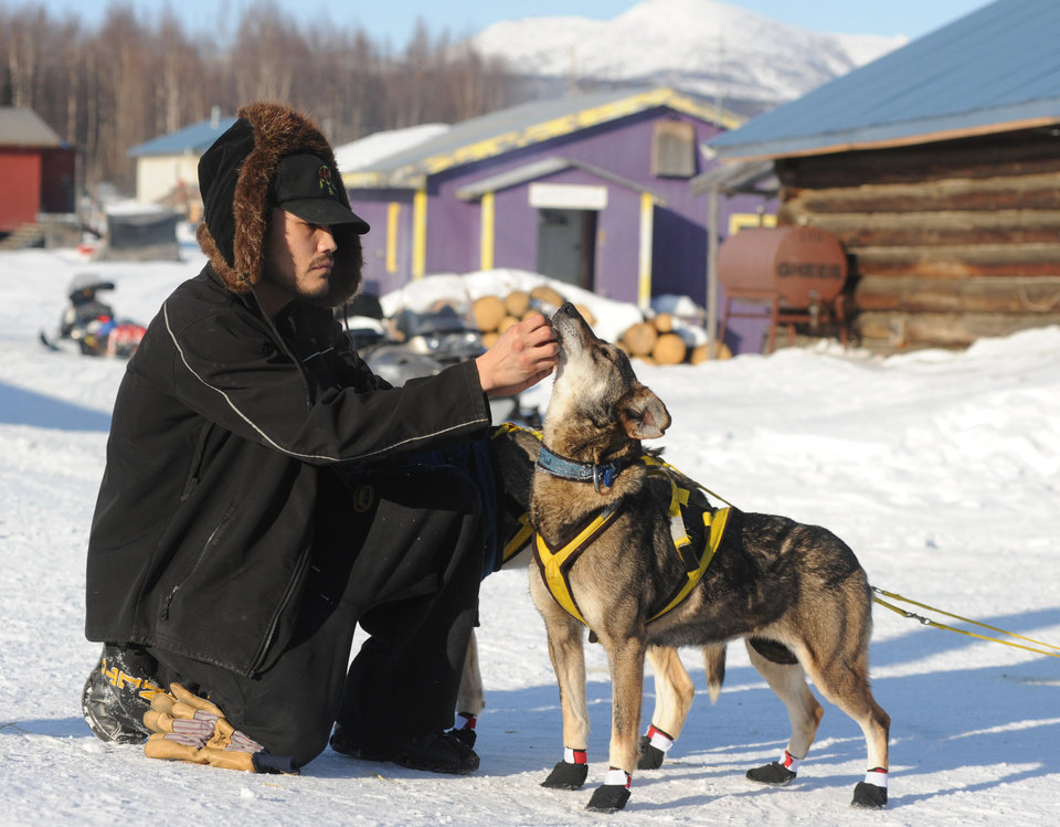 Photo - Frederick Huntington visits with one of Hans Gatt's dogs after he arrived into the Yukon River village of Kaltag during the 2014 Iditarod Trail Sled Dog Race on Saturday, March 8, 2014. (AP Photo/The Anchorage Daily News, Bob Hallinen)