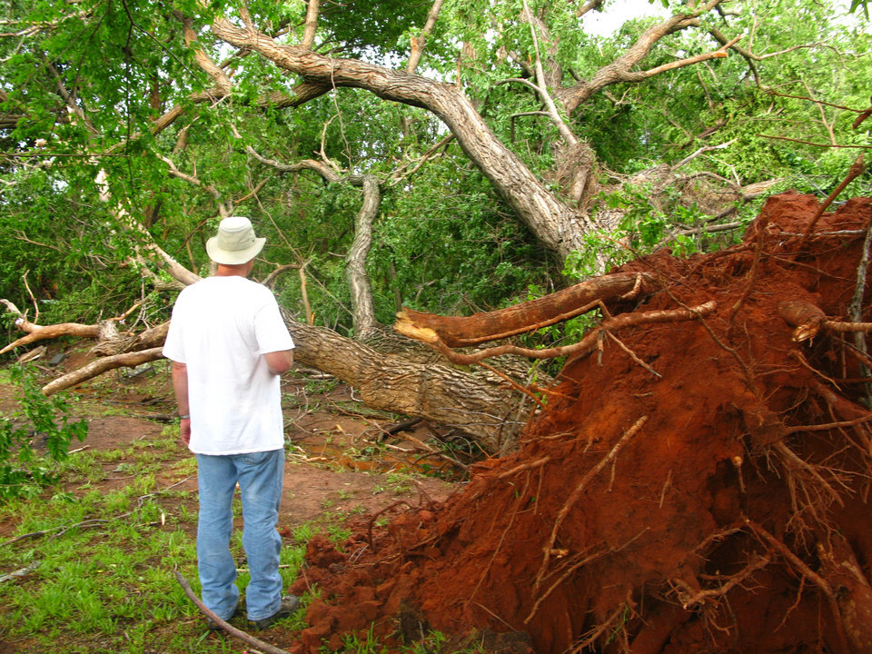 Reggie Ayers surveys a downed cottonwood tree estimated to be about 100 years old in his backyard in the Hidden Valley addition in southeast Edmond. Photo by Lillie-Beth Brinkman