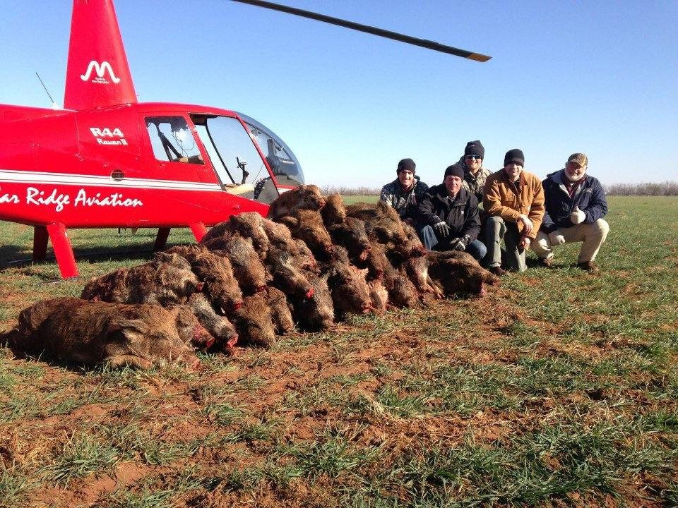 Photo - Customers pose with 42 hogs on a hunt recently in Texas. Photo provided