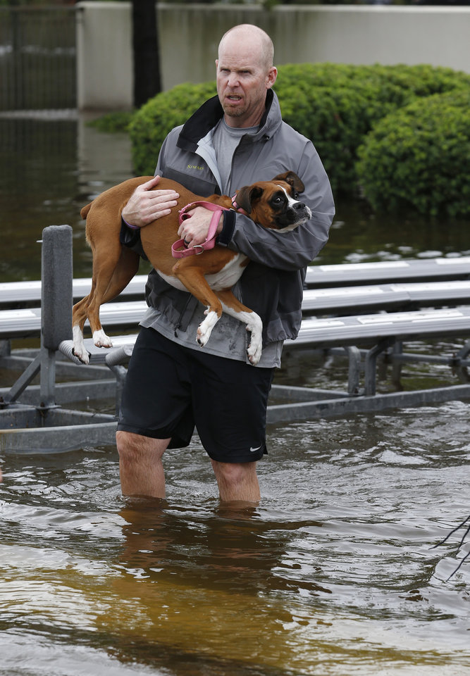 Photo - Joe Townsend carries Lola to shore after his family was rescued from Clear Creek flood waters in League City, Texas, Sunday, Aug. 27, 2017. (Kevin M. Cox/The Galveston County Daily News via AP)