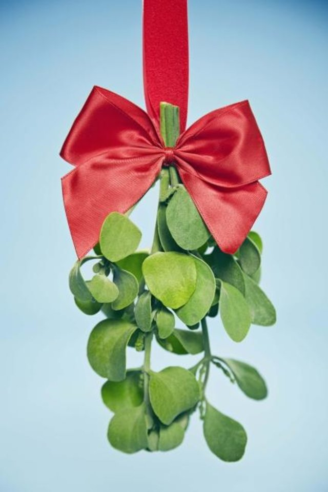 Photo -  Did you know? Mistletoe is Oklahoma's state floral emblem. [Metro Creative Connection]