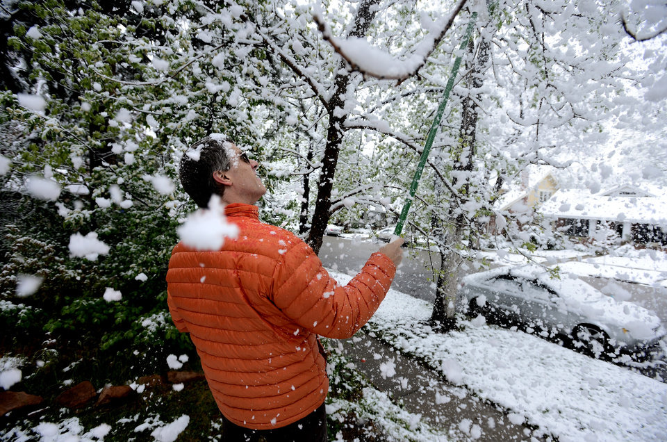 Photo - CORRECTS DATE TO MONDAY MAY 12 NOT MAY 9 - Brian Pryor takes a shower of snow as he clears the tree limbs in front of his home on University Hill in Boulder, Colo., on Monday, May 12, 2014. A spring storm that has brought over a foot of snow to parts of Colorado, Wyoming and Nebraska and thunderstorms and tornadoes to the Midwest was slowing down travelers and left some without power Monday morning.  (AP Photo/The Boulder Daily Camera, Paul Aiken) NO SALES
