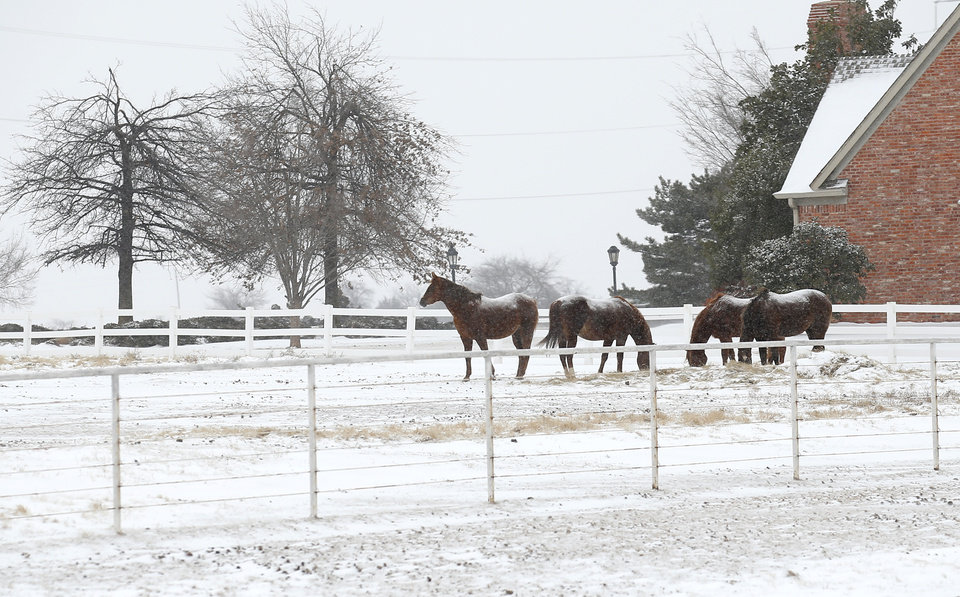 Photo - Horse stand in a field in northwest Oklahoma City, Sunday, Feb. 14, 2021. Photo by Sarah Phipps, The Oklahoman