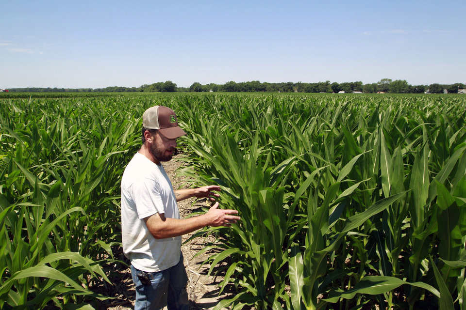 Photo -   Pat Giberson checks on his corn crop in Pemberton, N.J., Friday, July, 6, 2012. Despite extremely dry conditions and temperatures in the 90's, Giberson says compared with the crops in the drought-stricken midwest, his corn isn't doing too badly. (AP Photo/Mel Evans)