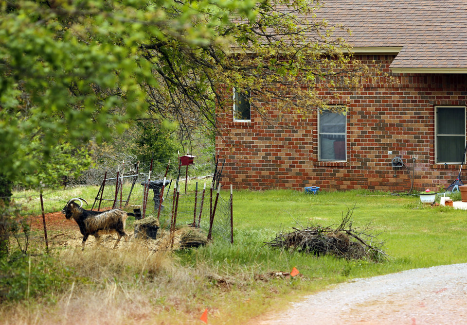 Photo -  A goat stands in the front yard of a house on E Robinson Street where the body of a man was found buried in the back yard in April. The man's caretaker has been charged with abusing the man and burying his body. PHOTO BY STEVE SISNEY, THE OKLAHOMAN ARCHIVE    STEVE SISNEY -
