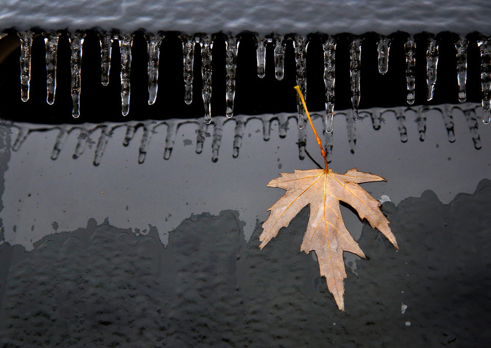 Photo - Autumn meets winter-- A lone leaf is frozen to the window of this vehicle while icicles form at the top of the window. Freezing rain and ice that moved through Oklahoma on Friday and today, Nov. 28, 2015, created problems for travelers and  left much of central and northwestern parts of the state encrusted in ice, especially vehicles, trees, and power lines on Saturday. Photo by Jim Beckel, The Oklahoman.