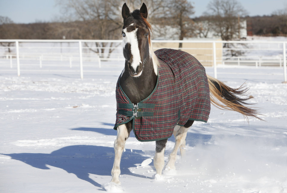 Photo - A horse runs in the snow at Cadence Equestrian Center in Logan County, February  2 , 2011. Photo by Steve Gooch, The Oklahoman