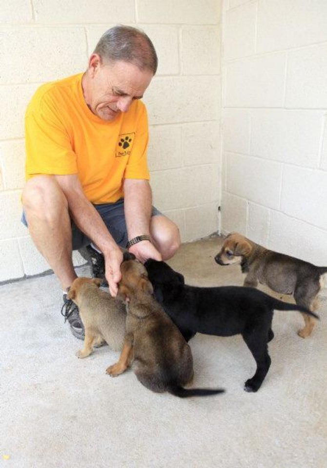 Photo - Ron Wingler, director of operations at Free to Live Animal Sanctuary, plays with rescued mixed-breed shar-pei puppies that are available for adoption. PHOTO BY PAUL B. SOUTHERLAND, THE OKLAHOMAN  PAUL B. SOUTHERLAND