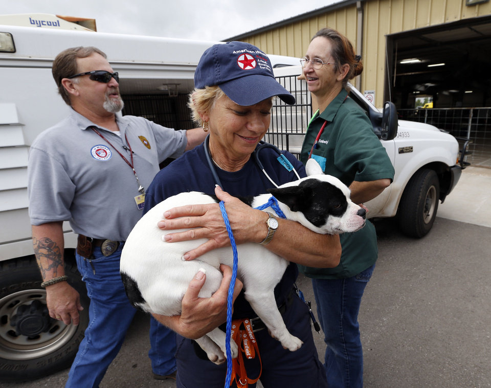 Photo - Phoenix veternarian Lorna Lanman carries a new arrival brought in by Moore animal control officer Ronnie Warlick, left, as volunters  work with pets that survived the Moore Tornado at the Cleveland County Fairgrounds on Wednesday, May 29, 2013 in Norman, Okla. At right is Edmond veternarian Dr. Kimberly Weiss.  Photo by Steve Sisney, The Oklahoman
