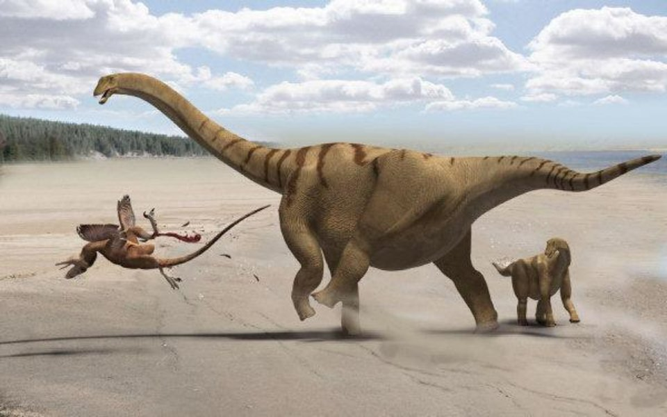 Photo - NEW DINOSAUR: Fig. 12. Speculative life restoration of the camarasauromorph sauropod Brontomerus mcintoshi from the Lower Cretaceous Cedar Mountain Formation of Utah. Adult individual (sized according to the referred scapula) protects juvenile (sized according to the holotype ilium) from a Utahraptor: the enlarged femoral protractors may have enabled a powerful kick. By Francisco Gasc?. Reproduced with permission. ORG XMIT: KOD