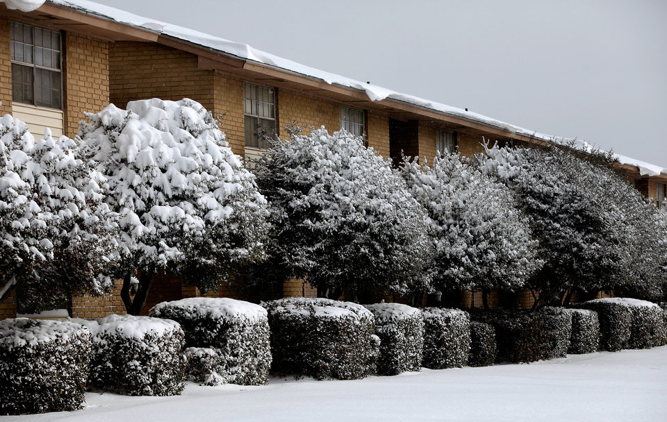 Photo - Bushes and trees at this Del City apartment complex are covered with snow. A second winter storm in a week dumped about 6 inches of snow in the Oklahoma City area Tuesday morning, Feb. 9, 2011.   Photo by Jim Beckel, The Oklahoman