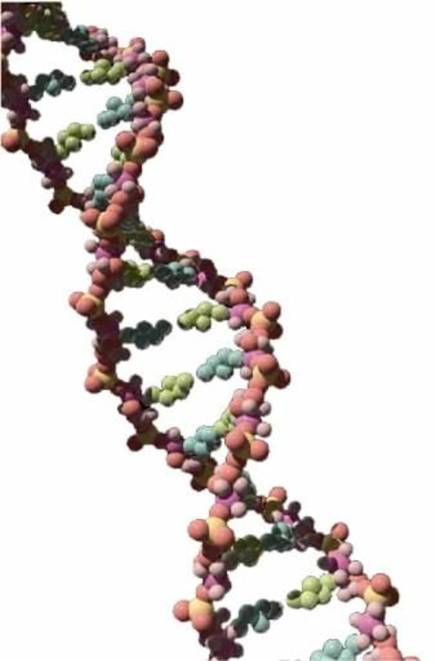 A DNA strand. File art.