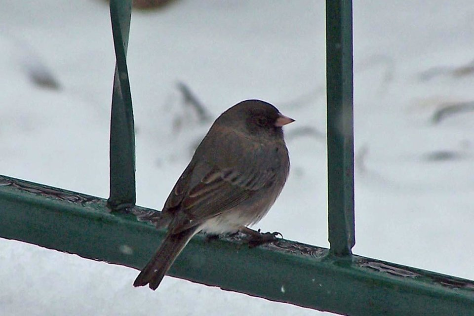 This bird perched on the railing on my back porch just long enough for me to take his picture.<br/><b>Community Photo By:</b> Cindi Tennison<br/><b>Submitted By:</b> Cindi , Bethany