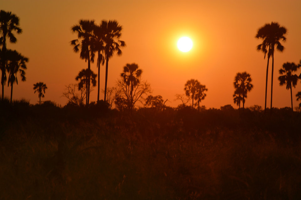 Photo - This March 1, 2013 photo shows a sunset in Botswana's Okavango Delta. Trees silhouetted against a bright orange sky lit by a searing white disc is a typical sight for sunsets  in the region, a popular destination for animal-watching safaris. (AP Photo/Charmaine Noronha)