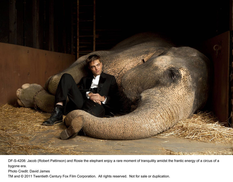 WATER FOR ELEPHANTS  Jacob (Robert Pattinson) and Rosie the elephant enjoy a rare moment of tranquility amidst the frantic energy of a circus of a bygone era.  Photo credit: David James  TM and �© 2011 Twentieth Century Fox Film Corporation. � All rights reserved. � Not for sale or duplication.
