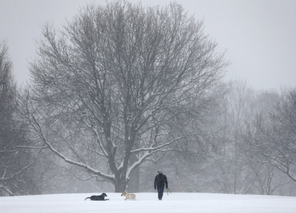 Photo - Dogs play in the snow in Washington Park on Wednesday, Feb. 5, 2014, in Albany, N.Y. Hundreds of schools across upstate New York are closed and authorities are advising against any unnecessary travel as a snowstorm moves across the region. (AP Photo/Mike Groll)