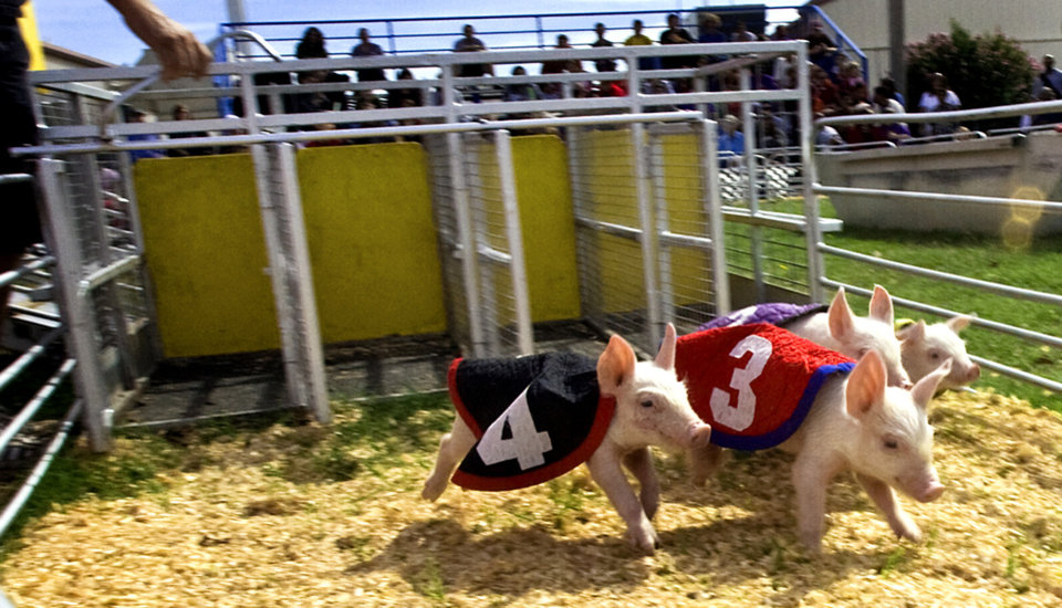 Baby pigs take out of the starting gate for the pig races at the 2009 Oklahoma State Fair at State Fair Park on Wednesday, Sept. 23, 2009, in Oklahoma City, Okla.  Photo by Chris Landsberger, The Oklahoman.
