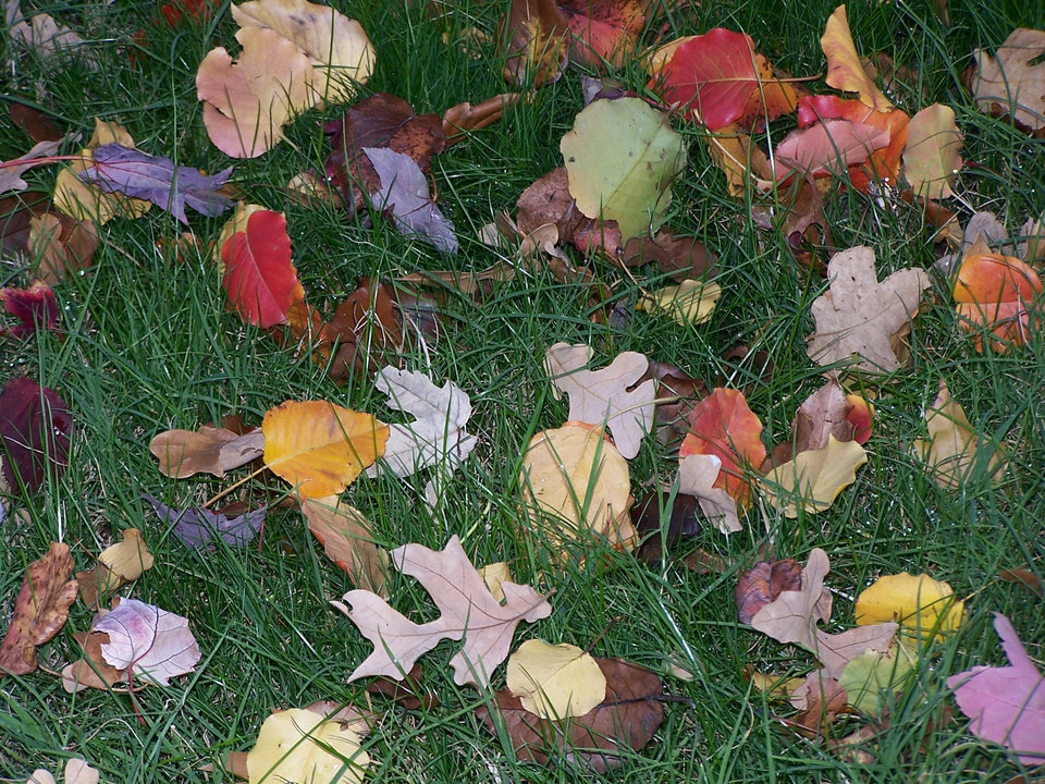 Nature's fall pallette<br/><b>Community Photo By:</b> Cindi Tennison<br/><b>Submitted By:</b> Cindi , Bethany