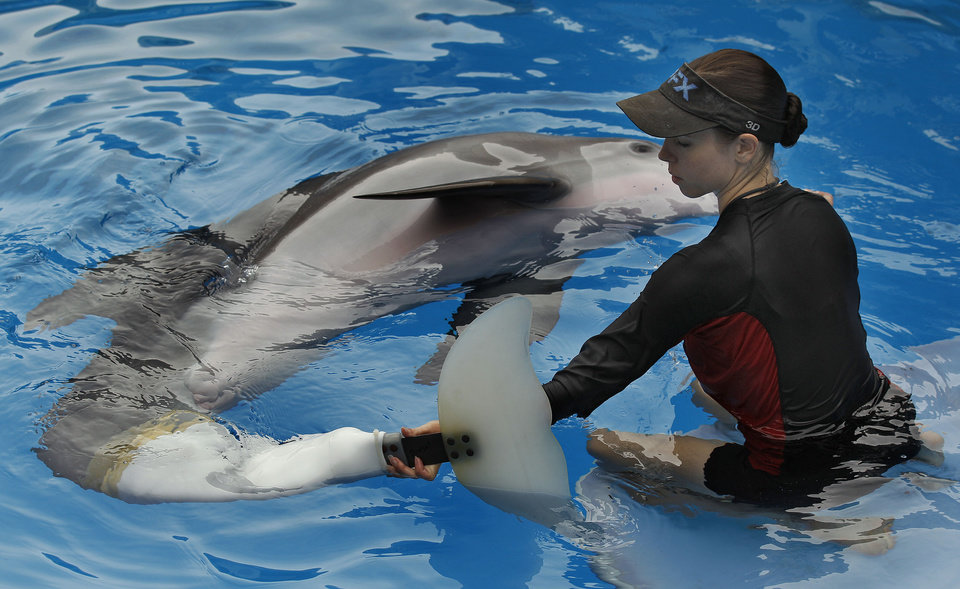 """Photo - In this Aug. 3, 2011 file photo, Clearwater Marine Aquarium senior marine mammal trainer Abby Stone works with Winter the dolphin in Clearwater, Fla. The Clearwater Marine Aquarium was heavily featured in the 2011 film """"Dolphin Tale,"""" which told a fictionalized account of Winter the dolphin. The film reached audiences world wide and brought thousands of visitors to the aquarium.  The aquarium's story is one that Film Florida, a lobbying group for the state's entertainment industry, pushed recently when a delegation of filmmakers and others met with lawmakers in Tallahassee about extending the state's incentive program for luring movie and TV production. (AP Photo/Chris O'Meara, File)"""