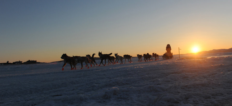 Photo - Iditarod musher Michelle Phillips, from Tagish, YT, Canada, arrives at the Unalakleet checkpoint at sunrise during the 2014 Iditarod Trail Sled Dog Race on Sunday, March 9, 2014. (AP Photo/The Anchorage Daily News, Bob Hallinen)