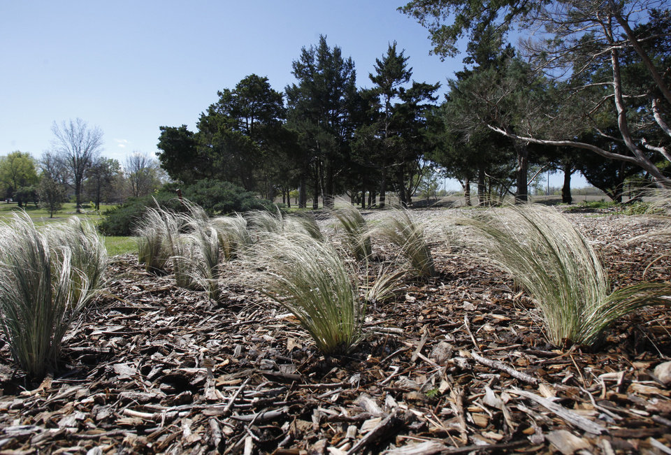 Photo - Native grasses and shrubbery are a new focus at the arboretum at Will Rogers Gardens. Oklahoma City celebrates Arbor Week next week.  PAUL HELLSTERN - The Oklahoman