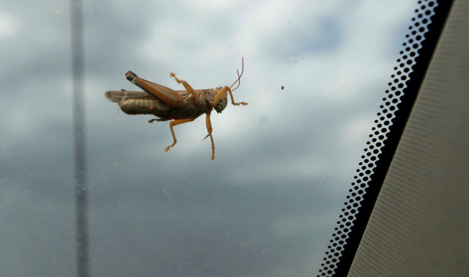 A grasshopper sits on the windshield of Fred Reuter\'s truck in El Reno, Okla., Thursday, Aug. 16, 2012. Photo by Sarah Phipps, The Oklahoman