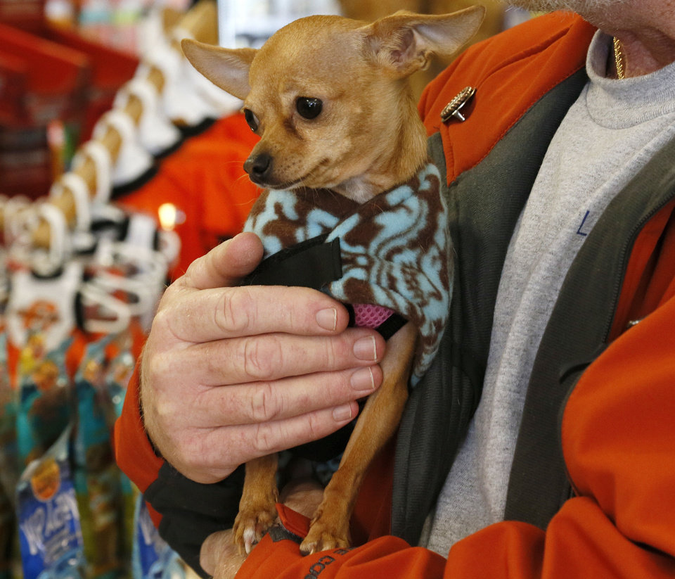 Left: Squeaky, a Chihuahua, rests in the arms of her owner, Doyle Tilson, at A1 Pet Emporium.