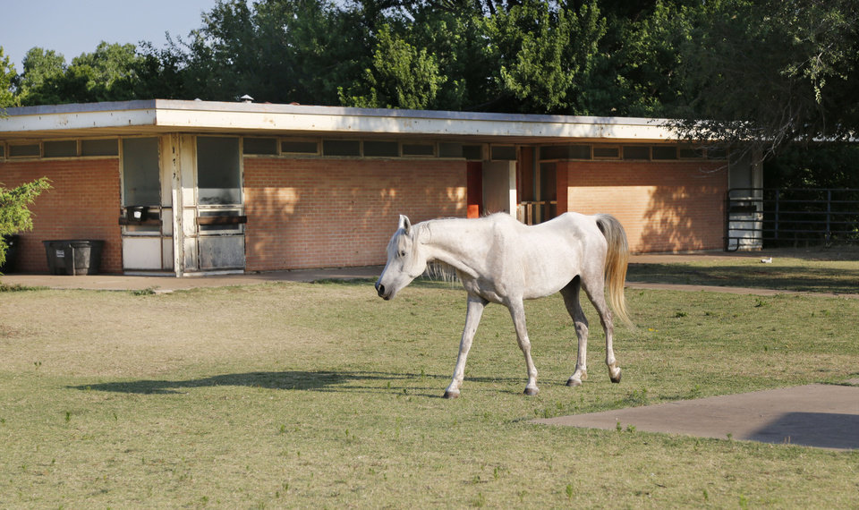 Photo -  A horse walks past long abandoned Lone Star School, on the southwest corner of E Hefner Road and N Eastern Avenue. [PHOTO BY PAUL HELLSTERN, THE OKLAHOMAN]