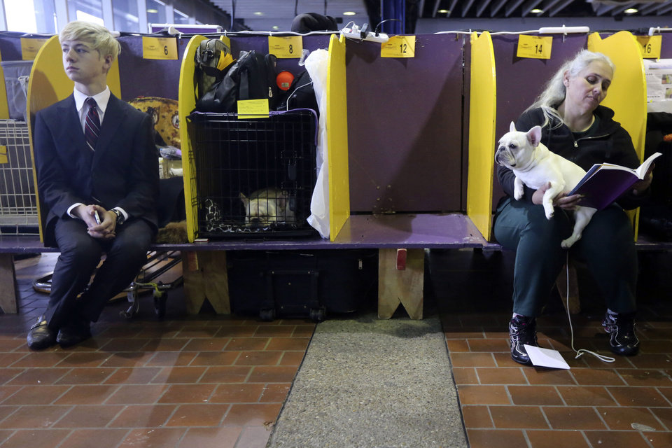 Handlers sit in the benching area with their dogs while they wait to compete during the 137th Westminster Kennel Club dog show, Monday, Feb. 11, 2013 in New York.  (AP Photo/Mary Altaffer) ORG XMIT: NYMA118