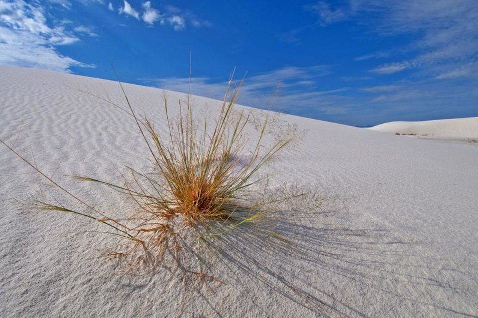 Photo - New Mexico, White Sands National Monument 275 square miles of gypsum sand dunes in the Chihuahuan Desert
