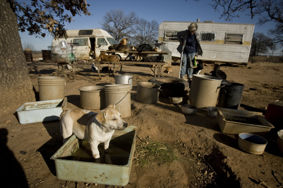 Photo - One of Catherine Titus' puppies plays in its water bowl while she tends to the 100 plus dogs she care for on Tuesday, Dec. 30, 2008, in Wilson, Okla. Titus who live out of a broken down van with no running water or electricity spends most all of her monthly $700 Social Security check to care for the dogs she calls her best friends. 