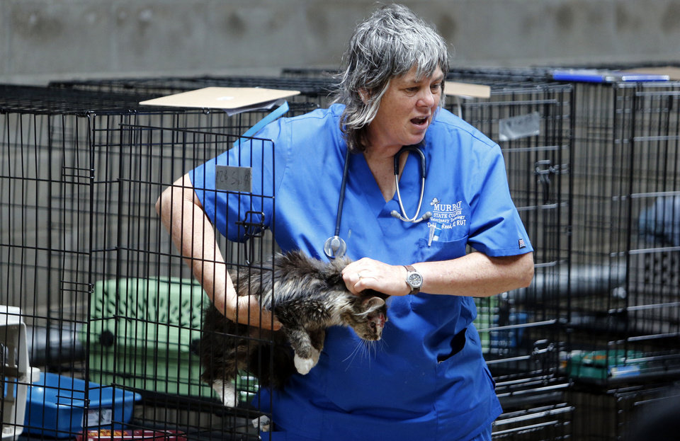Photo - Vet tech Debbie Reed carries an injured cat inside the clinic section of the building as volunters  work with pets that survived the Moore Tornado at the Cleveland County Fairgrounds on Wednesday, May 29, 2013 in Norman, Okla. Photo by Steve Sisney, The Oklahoman