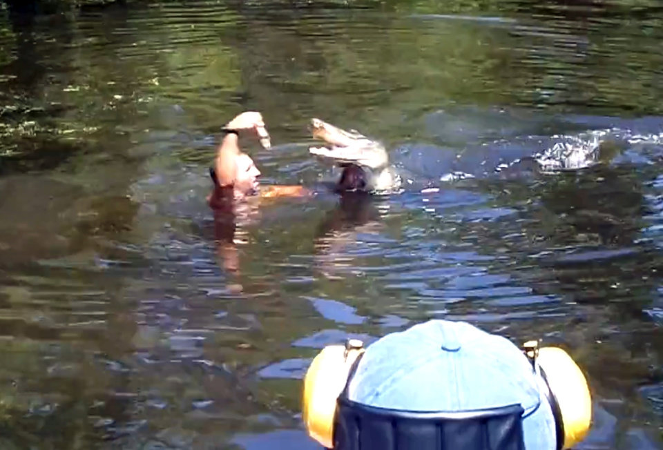 Photo - This screen grab from video released by Stacy Hicks shows an unidentified tour guide for Airboat Adventures swimming with and feeding alligators, at one point feeding a marshmallow to a gator with his teeth. (AP Photo/Stacy Hicks)