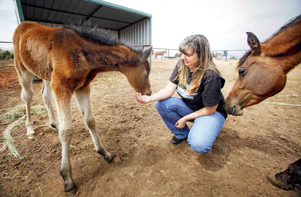 Photo - Horse rescuer Natalee Cross pets Striker as his mother, Cloe, nuzzles Cross. Cloe was pregnant and emaciated when Cross rescued her herd of 20 neglected horses in Garvin County. Horse rescue groups across the country are feeling an economic crunch. PHOTO BY CHRIS LANDSBERGER, THE OKLAHOMAN