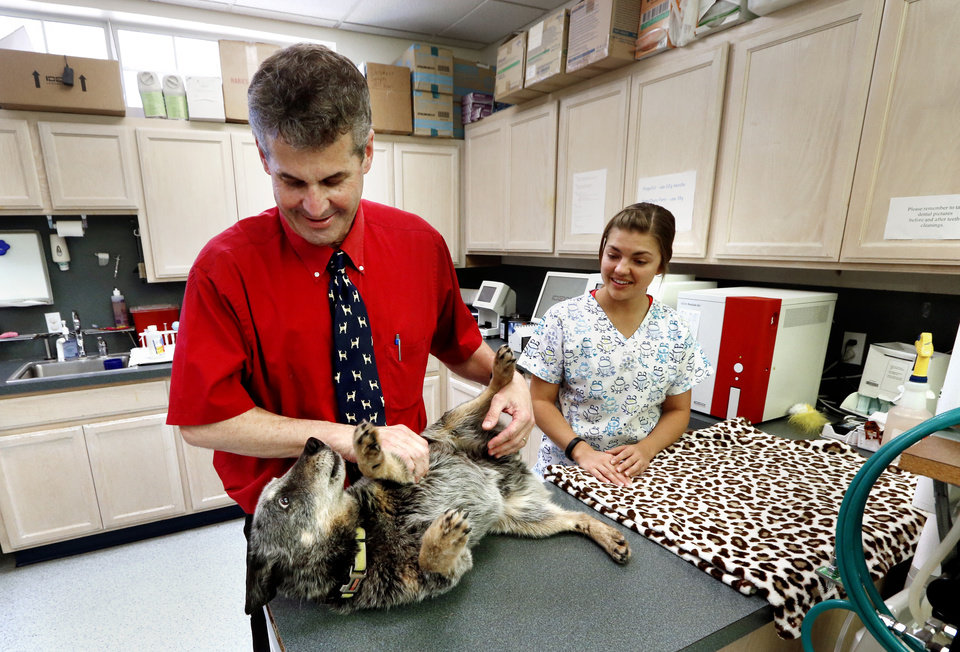 Photo -  Norman Veterinarian Dr. John Otto works with Cody recently at his animal hospital in Norman. Assistant Lesley Wegner is at right. [Photo by Steve Sisney, The Oklahoman]