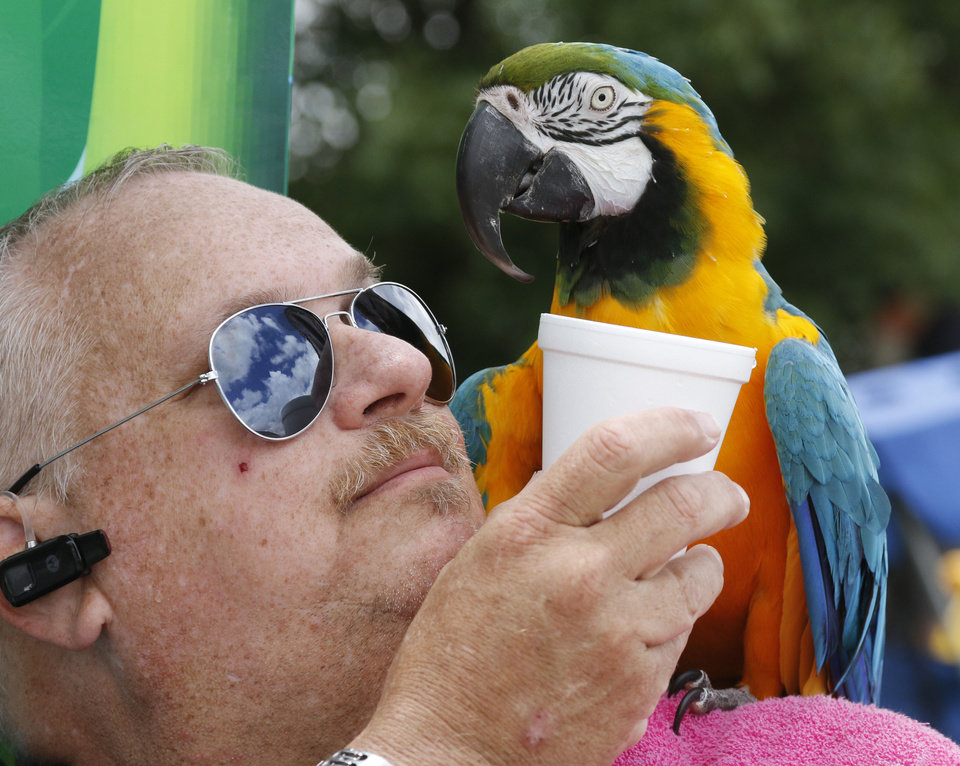 Photo -  Gerald Pettengill gives a drink of water to Oscar, a blue and gold macaw, during the Made in Oklahoma festival in Midwest City. Photo by Paul Hellstern, The Oklahoman   PAUL HELLSTERN -