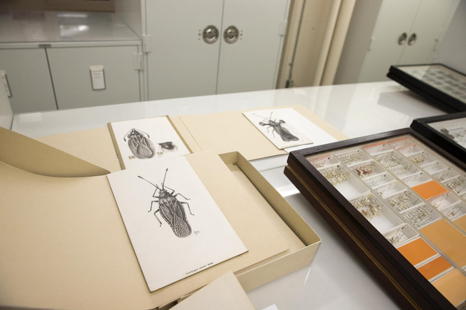 Photo - This photo taken June 5, 2014 shows a room where the Drake bug collection is held at the Smithsonian Natural History Museum in Washington. When Dr. Carl J. Drake died in 1965 he left the Smithsonian's National Museum of Natural History $250,000 and his collection of thousands of bugs. Drake, an entomologist, spent his life studying insects, and he gave the Smithsonian a mission for his money: buy more bugs. After nearly half a century, however, the Smithsonian is having a hard time following the directives of Drake's will. (AP Photo/ Evan Vucci)