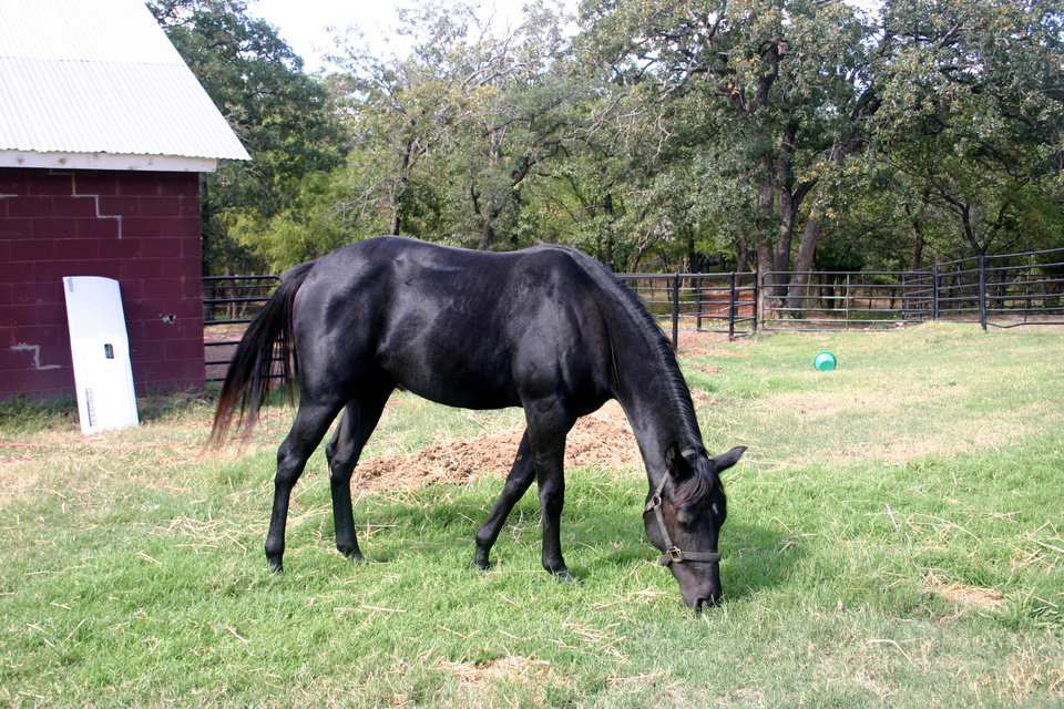 My horse Jet<br/><b>Community Photo By:</b> Dan Bradley<br/><b>Submitted By:</b> Dan, Harrah