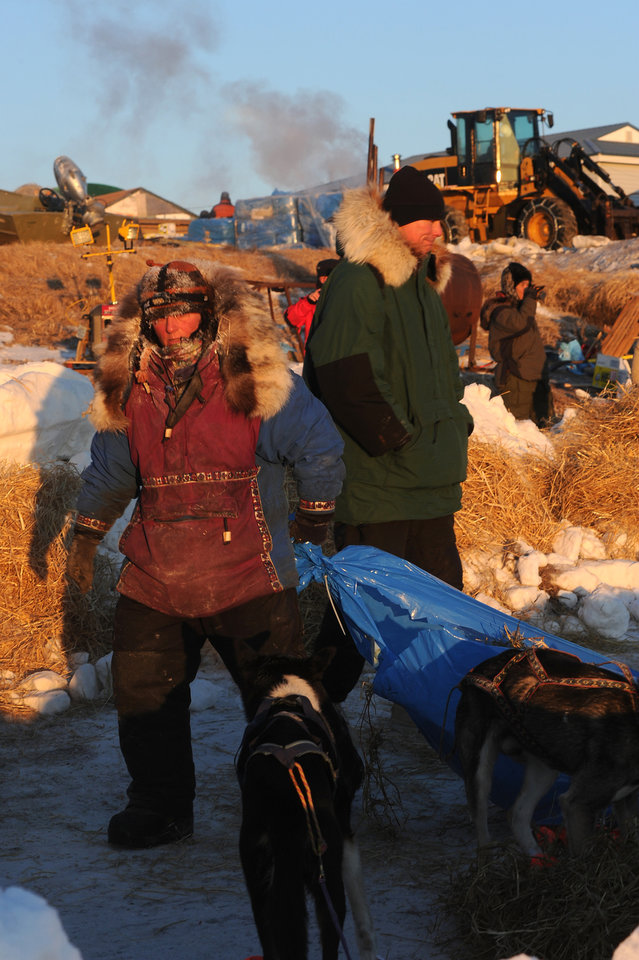 Photo - Mushers come into the Unalakleet checkpoint and care for their dogs during the 2014 Iditarod Trail Sled Dog Race on Sunday, March 9, 2014. (AP Photo/The Anchorage Daily News, Bob Hallinen)