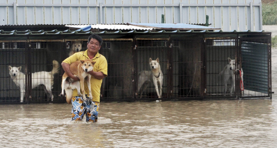 Photo -   A man carries his dog to safer place from the cages in Jindo, south of Seoul, South Korea, Thursday, Aug. 30, 2012. Strong winds and hard rain pounded parts of South Korea on Thursday, as the second typhoon this week barreled down on the Korean Peninsula only days after 20 people died or went missing in the South in the first storm. (AP Photo/Park Chul-hung, Yonhap) KOREA OUT