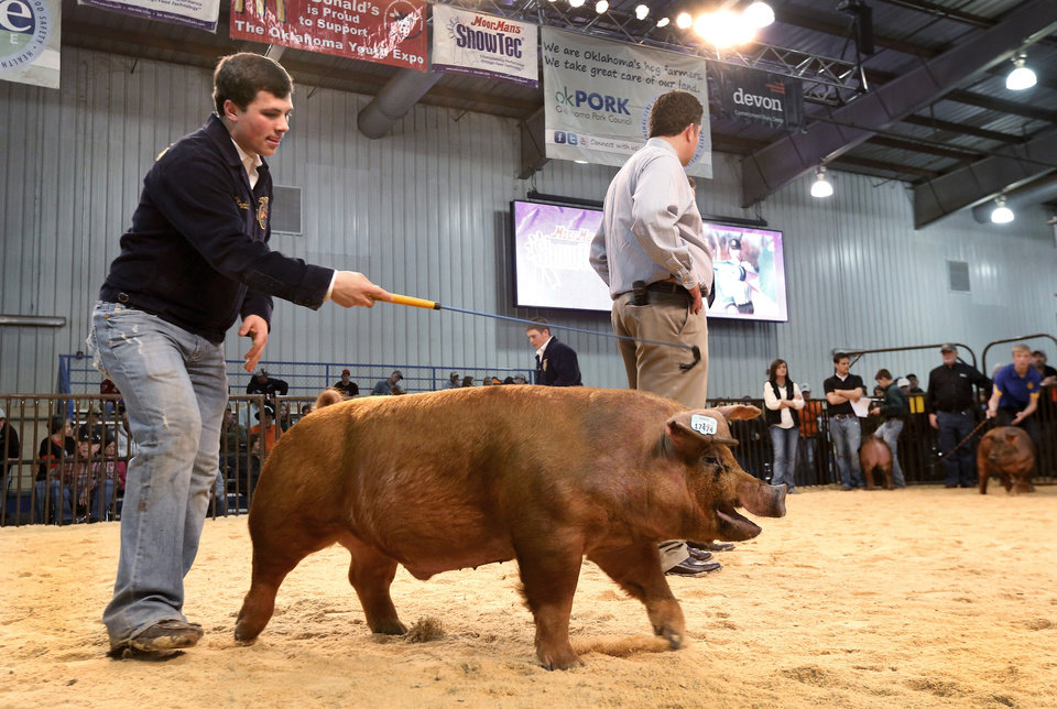 Photo - A youth directs his hog in the judging ring at the Oklahoma Youth Expo at State Fair Park on Tuesday,   March 18, 2014.  Photo by Jim Beckel, The Oklahoman