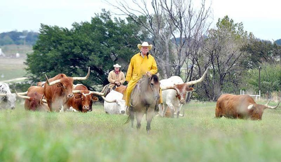 Photo - Cowboys herd longhorn cattle in a scene reminiscent of days gone by in Oklahoma. (Lawton Constitution photo)