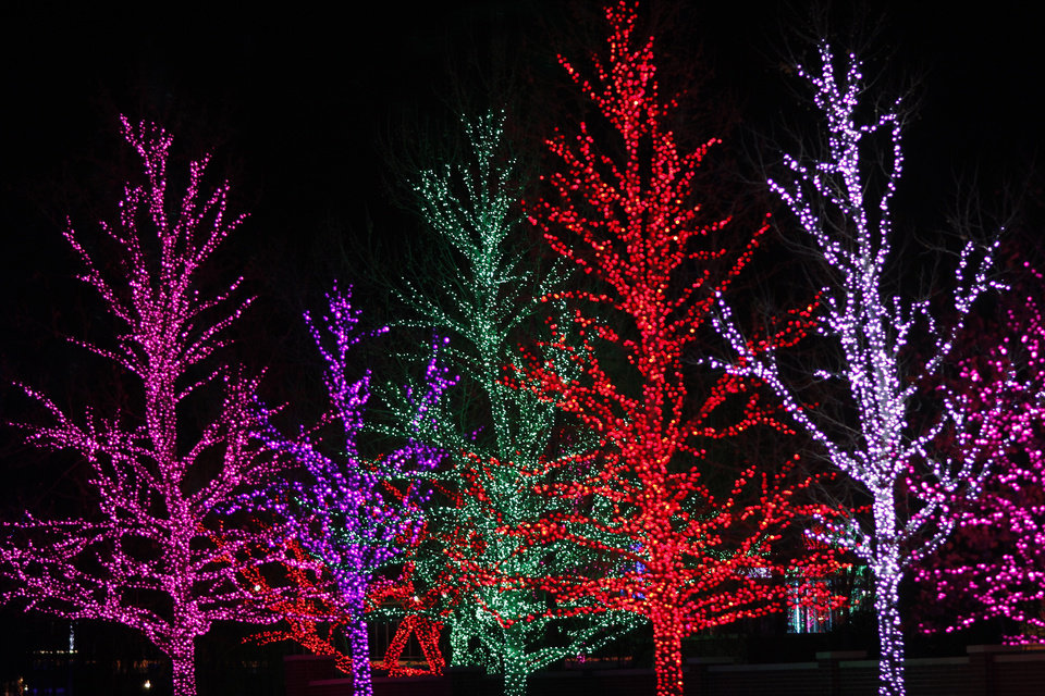 Photo - Trees lit for the holidays along Western on the Chesapeake Energy campus, Wednesday December 5, 2012. Photo by Doug Hoke, The Oklahoman