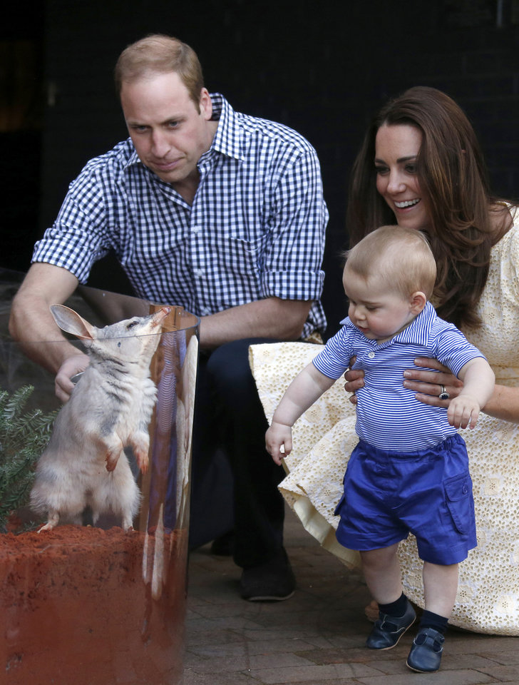 Photo - Britain's Kate, the Duchess of Cambridge and her husband Prince William watch as their son Prince George looks at an Australian animal called a Bilby, which has been named after the young prince, during a visit to Sydney's Taronga Zoo, Australia Sunday, April 20, 2014. (AP Photo/David Gray, Pool)