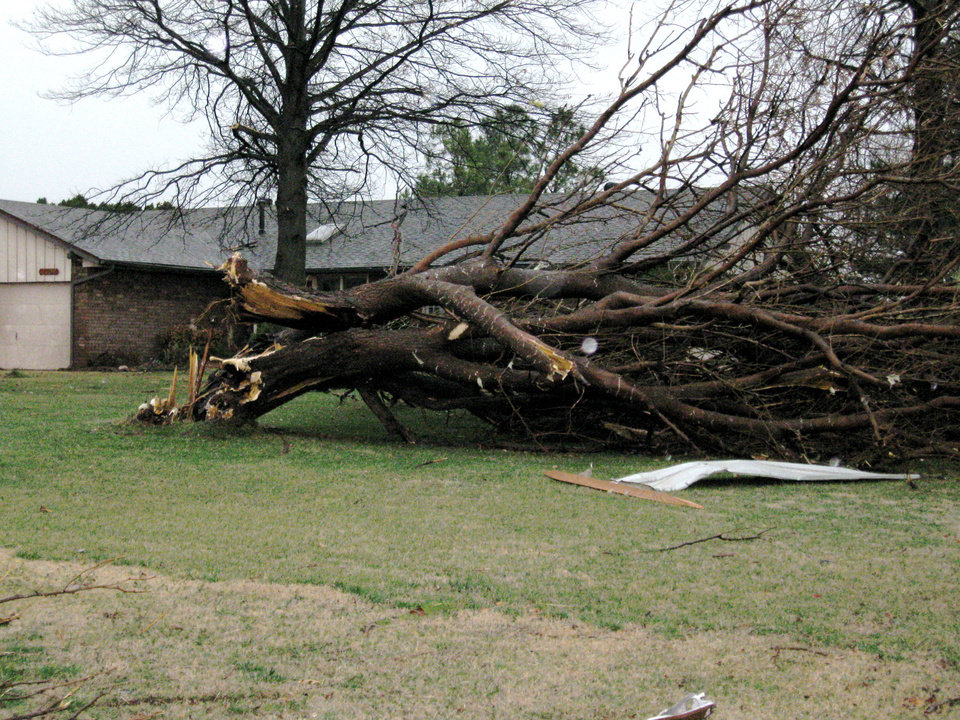 Photo - Storm damage on Big Cedar near Mitch Park. Photo by John A. Williams