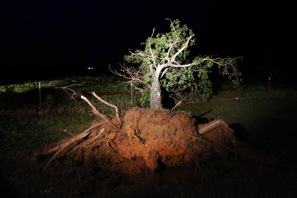 A large tree is uprooted where a tornado passed through Bethel Acres, Okla., Sunday, May 19, 2013. Photo by Sarah Phipps, The Oklahoman