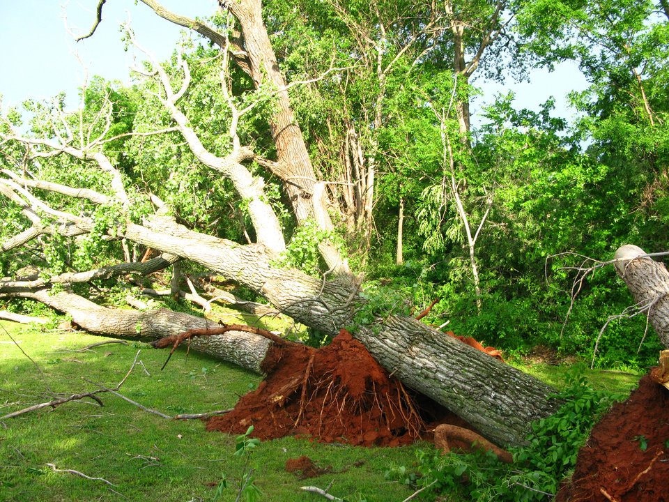 Storm damage in the Hidden Valley addition uprooted decades-old trees in southeast Edmond. Photo by Lillie-Beth Brinkman, The Oklahoman
